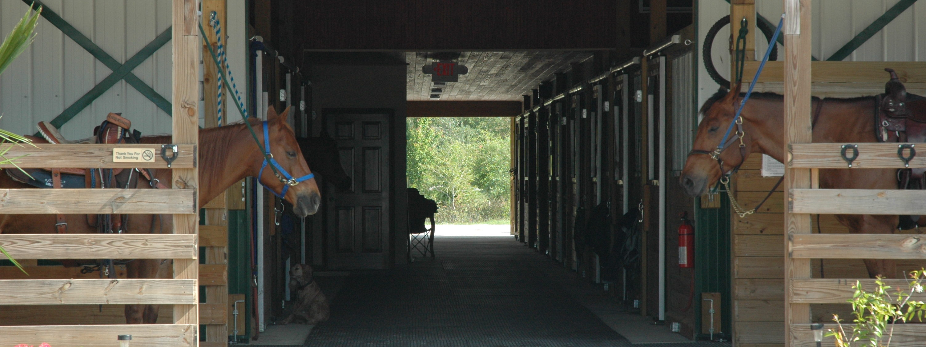 Double M Stables stalls